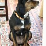 Beau's favorite blog dogs