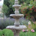 Practical Drought Tolerant Plants