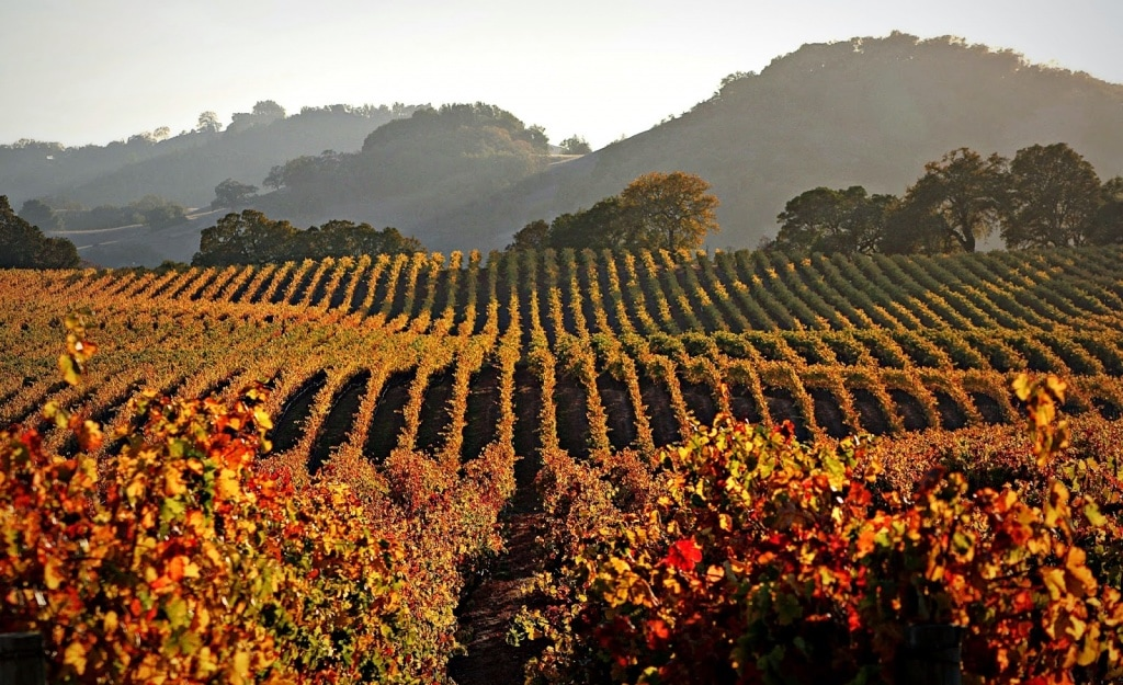 Image result for fall in the vineyard paso robles