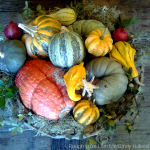 Last minute Centerpiece and Place Card Ideas for Thanksgiving
