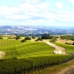 Wine Tasting at Epoch Winery-What to Wear, and how to Pack a Simple Picnic