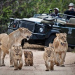 The Unparalled Camps at Londolozi