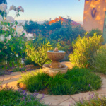 My California Garden in Spring-Part Two