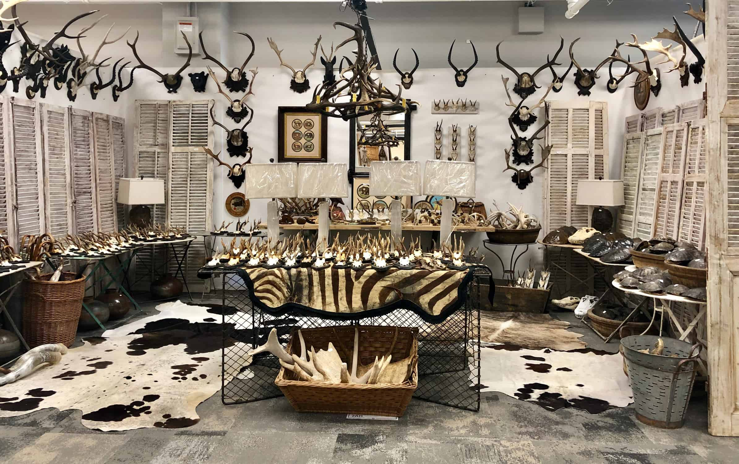 antlers and hides at Americas Mart