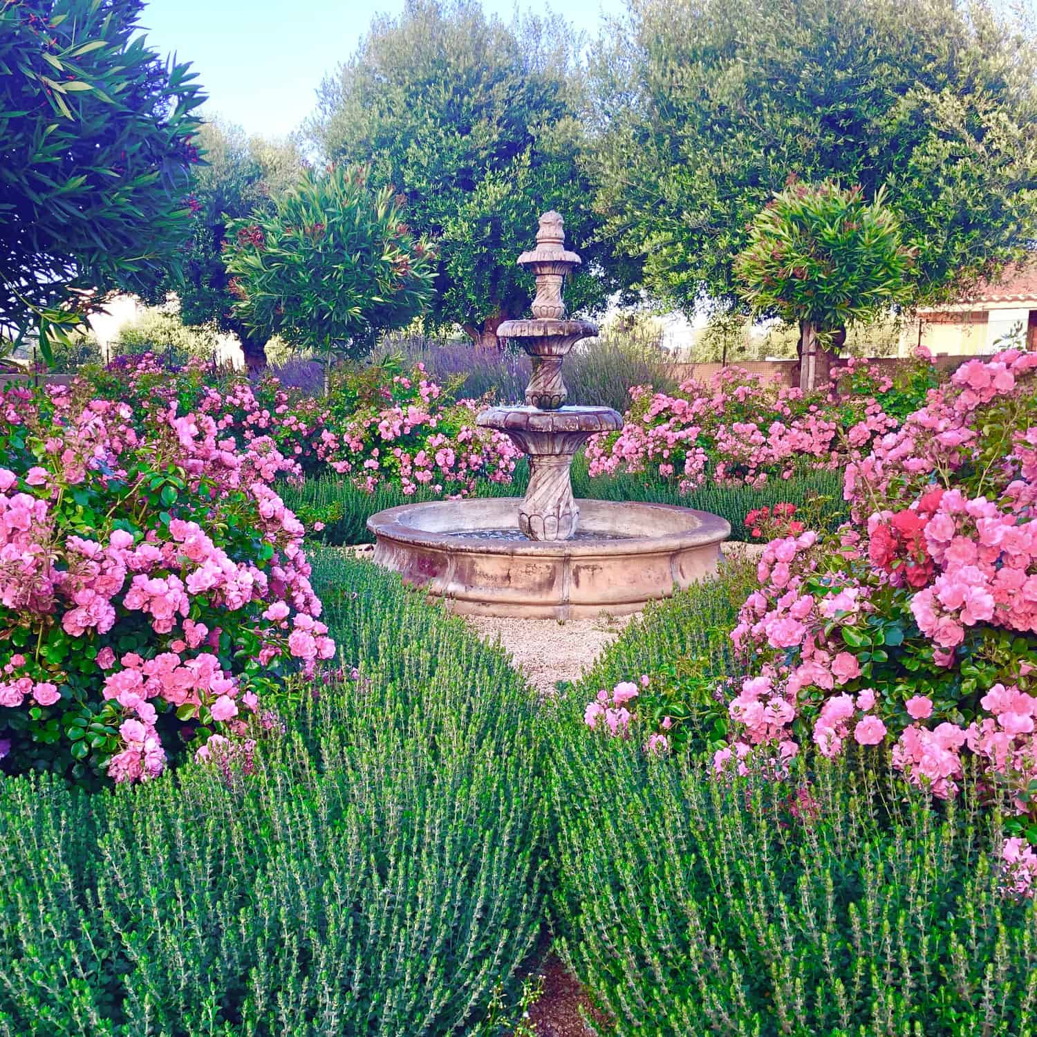 cindy hattersley s fountain surrounded by roses