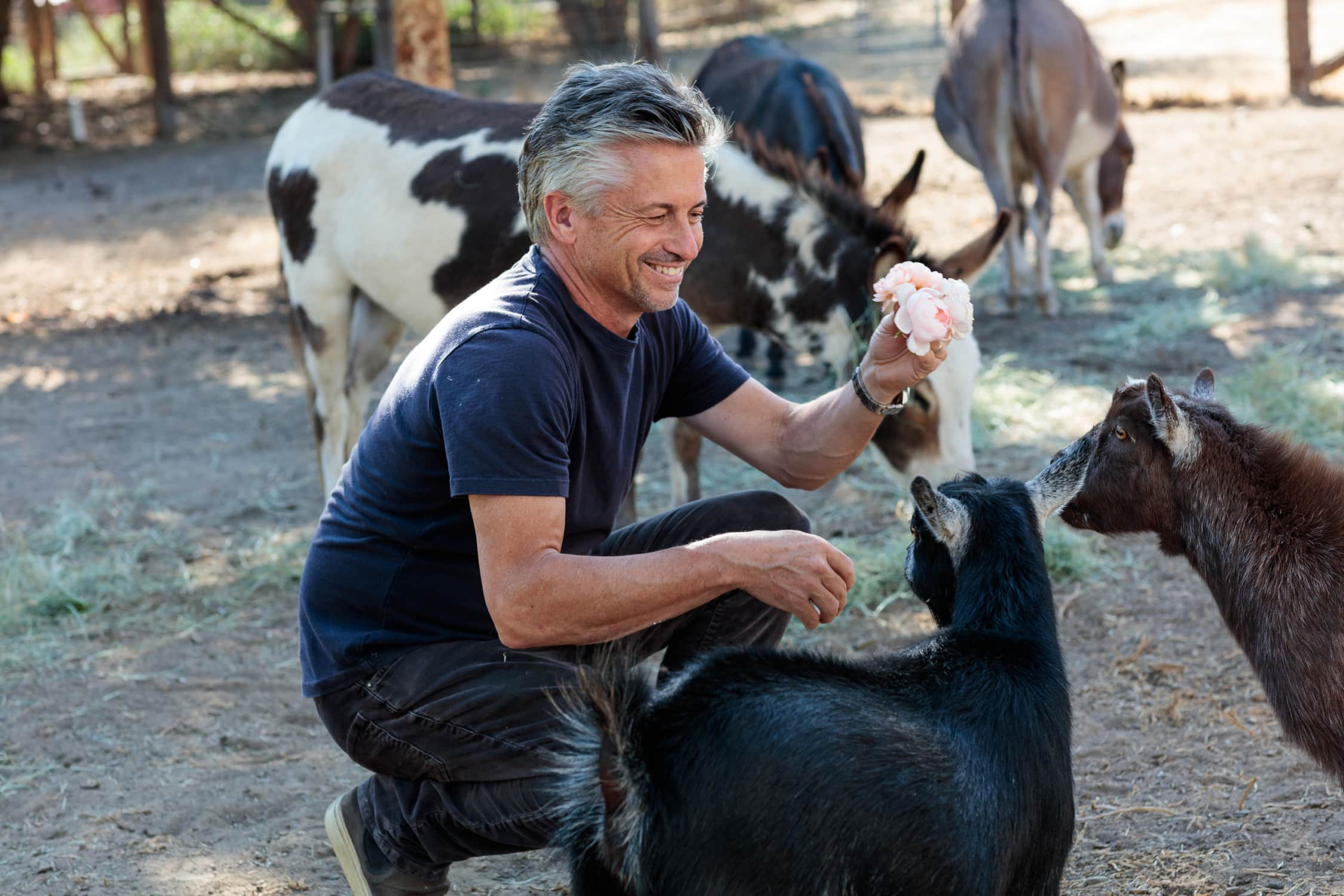 steve giannetti with goats