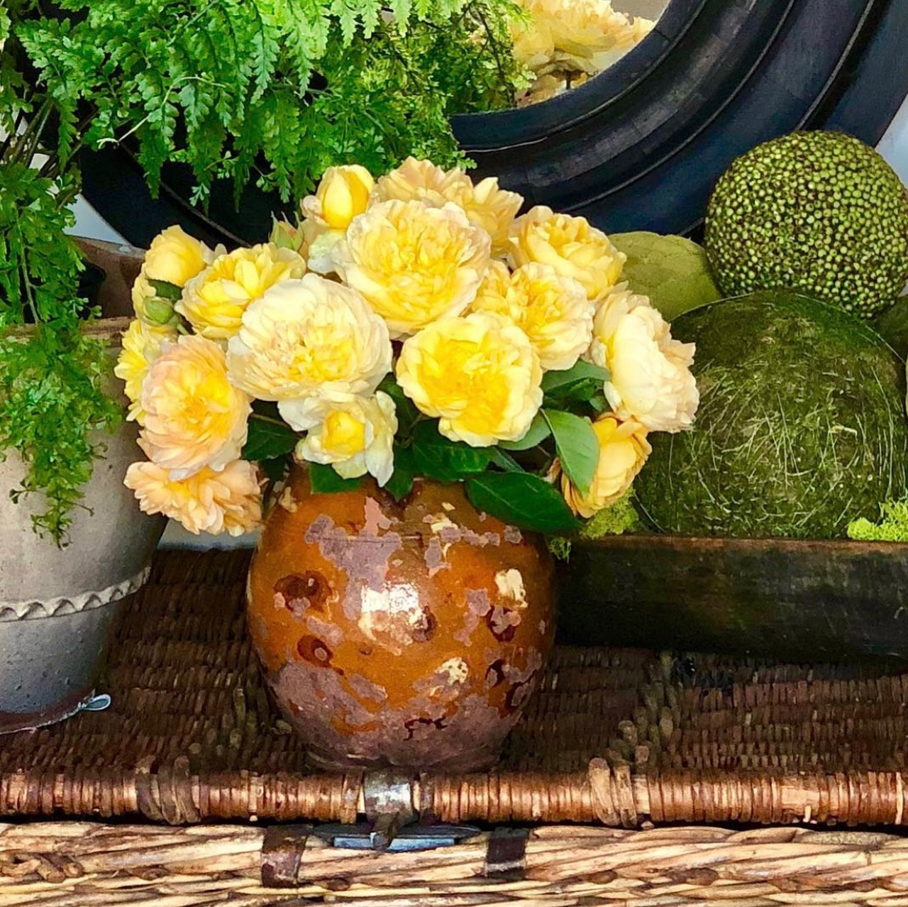 david austin roses in redware vessel cindy hattersley