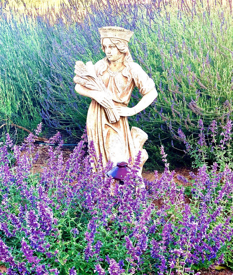 design blogger cindy hattersley'sfall statue with lavender and nepeta in cindy hattersleys garden
