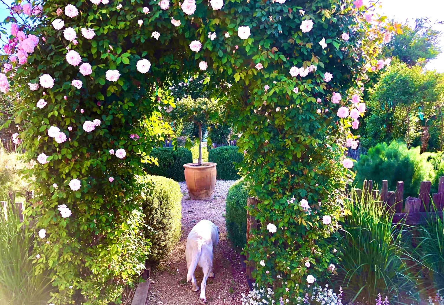 design blogger cindy hattersley's rose arbor