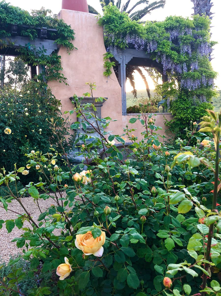 cindy hattersley's rose garden and fountain