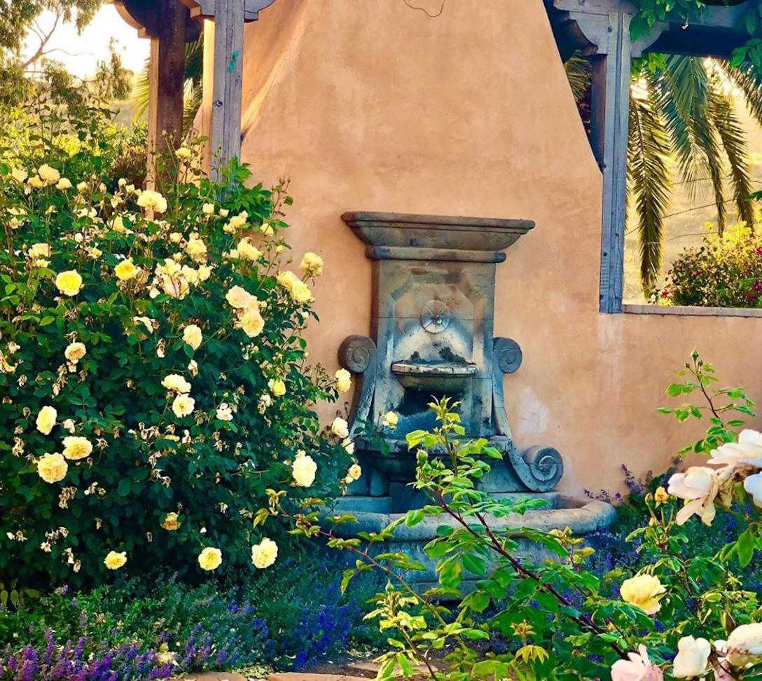 golden celebration closeup in cindy hattersley's rose garden