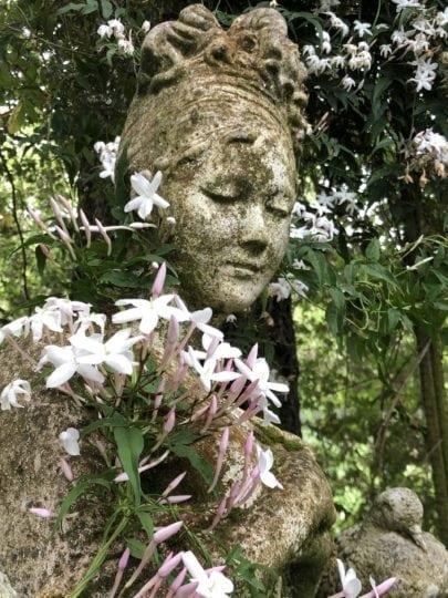 garden statue with jasmine