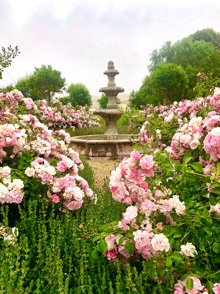 fountain with landscape roses