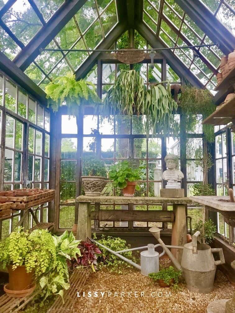 greenhouse camp boxwoods from Lissy Parker