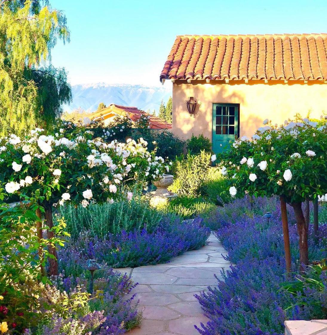 design blogger cindy hattersleys rose garden with fountain