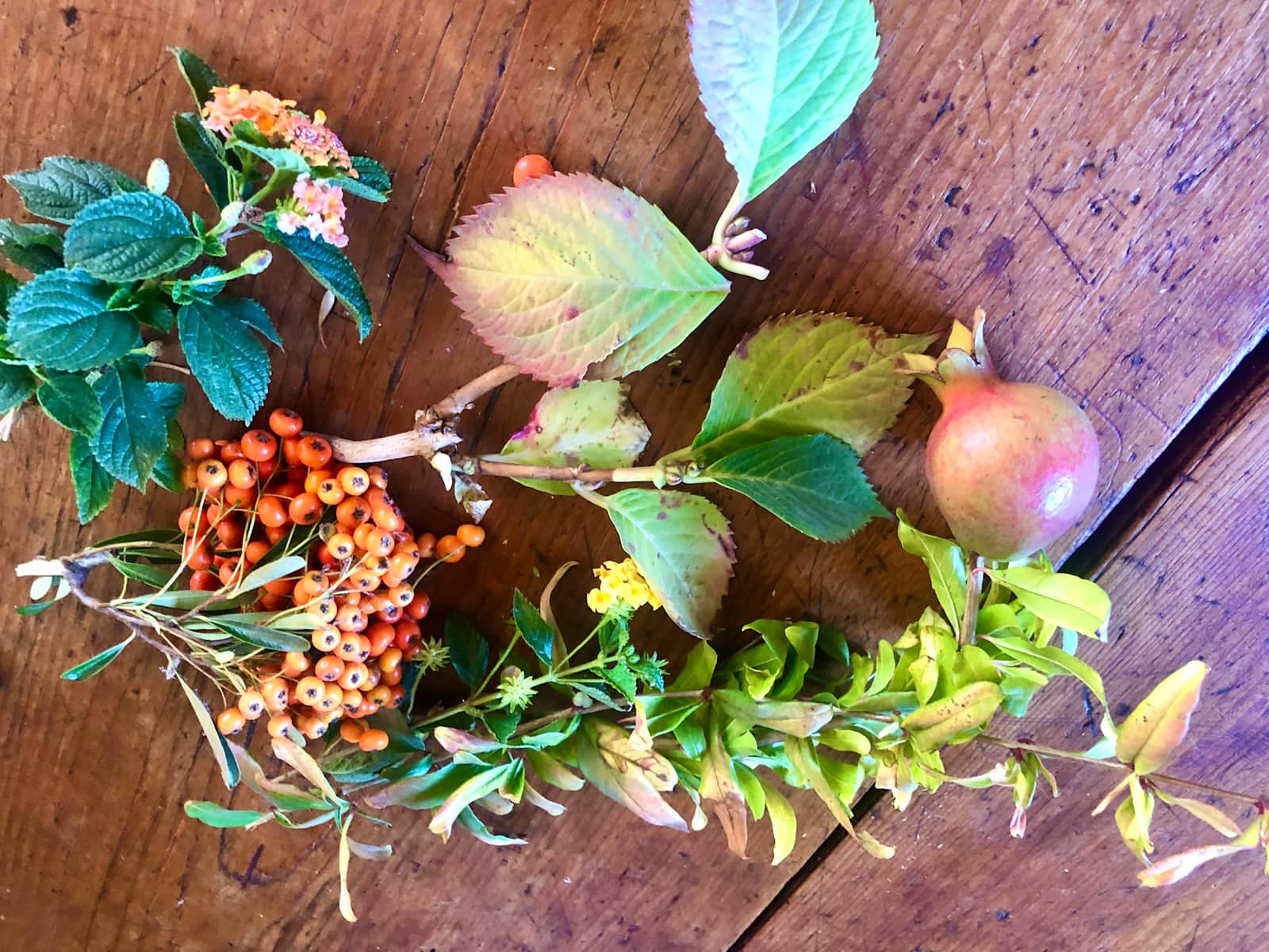 foraged florals on cindy hattersley's blog