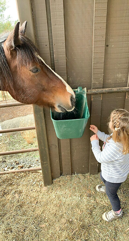cindy hattersley's granddaughter summer feeding horse 2021