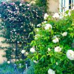 Five Favorites-Roses H&M & More