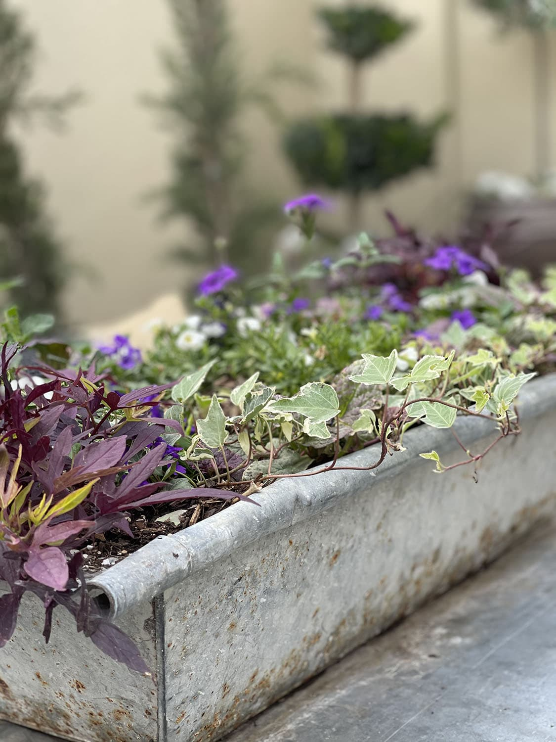 trough filled with plants