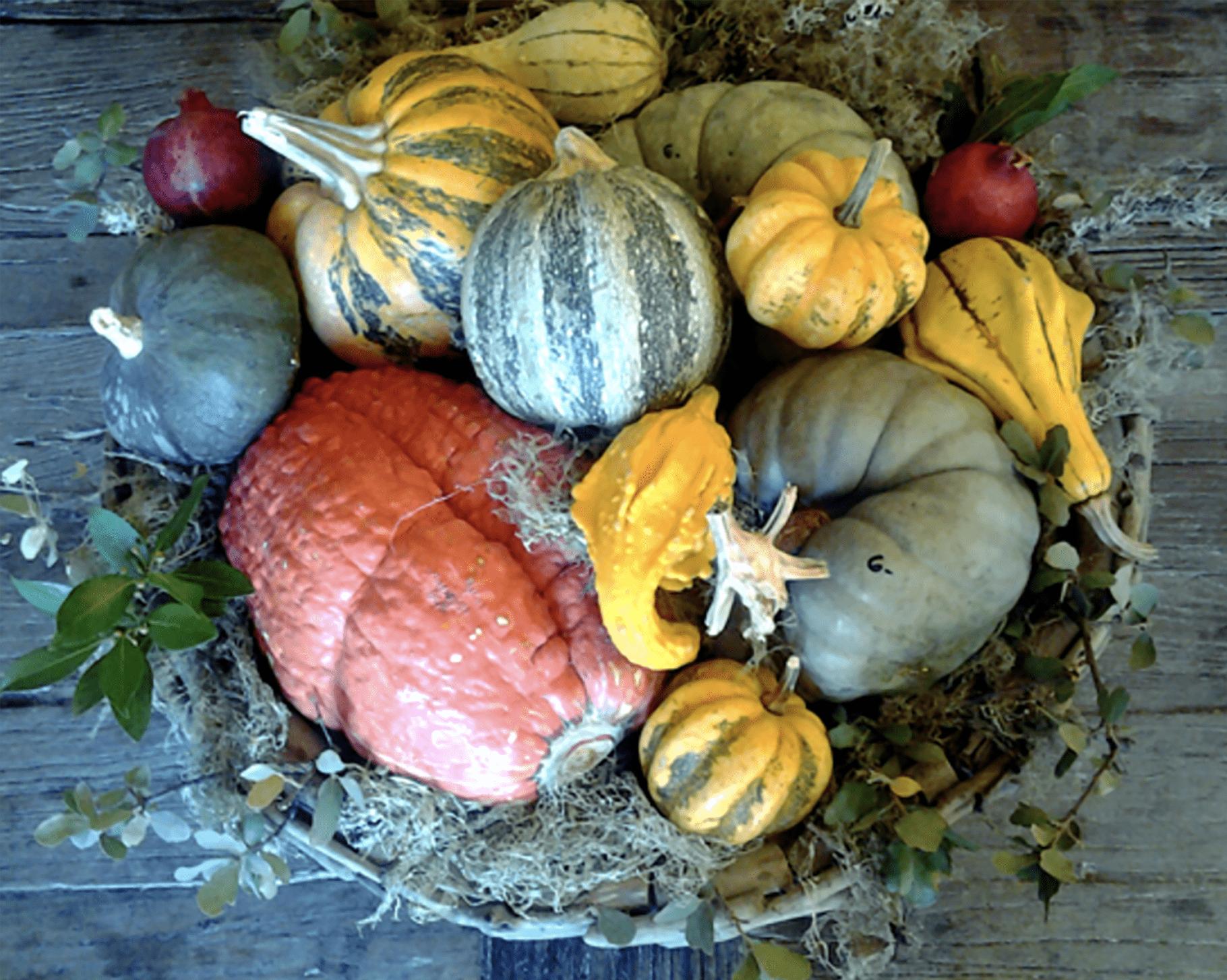 bowl of Cinderella Pumpkins